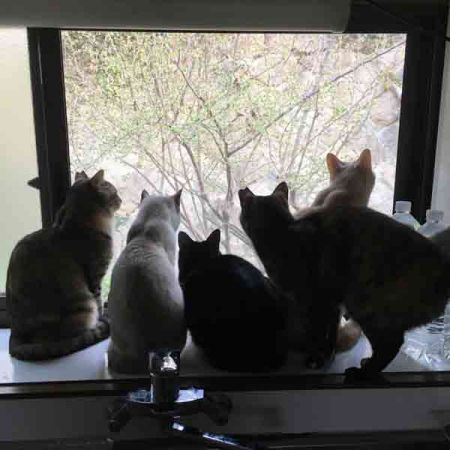 03225cats