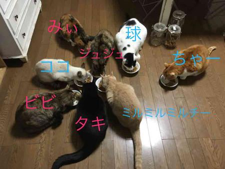 12248cats